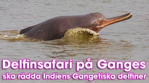 Delfinsafari på Ganges ska rädda Indiens delfiner