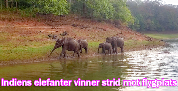 Elefanter vinner strid mot flygplats i Jharkhand
