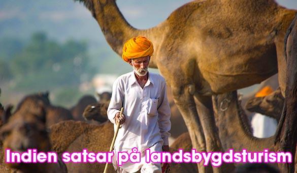 Indien satsar på landsbygdsturism