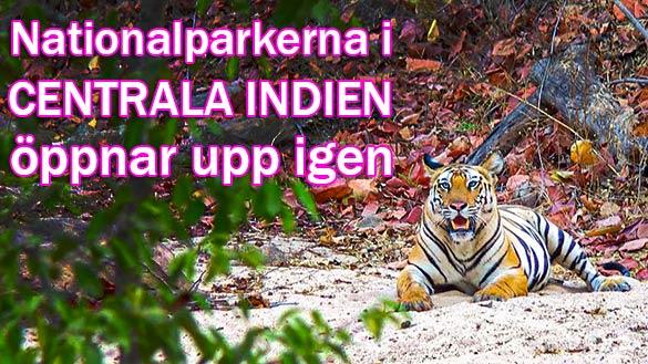 Indiens nationalparker i Madhya Pradesh öppnar igen