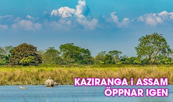 Nationalparken Kaziranga i Assam, Indien, öppnar upp för turism igen