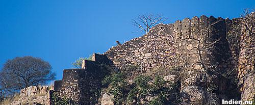 Ranthambore fort med leopard på muren